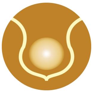 icon_body-fusion